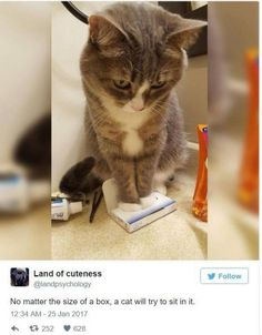 19+LOL CAT MEMES/PIC TO MAKE YOU BEND OVER LAUGHING  #funnycats  #funnyanimals #funnypets #funnypics