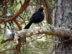 Forest, Espoo, Forest, Bird #forest, #espoo, #forest, #bird