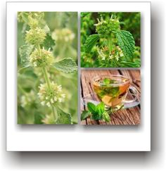 Plante medicinale – UNGURAȘUL Herbs, Vegetables, Therapy, Varicose Veins, Plant, Herb, Vegetable Recipes, Veggies, Medicinal Plants