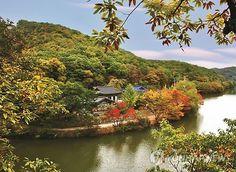 포항 12경의 하나인 포항시 남구 오어사(吾魚寺)가 가을 단풍에 둘러싸여 한폭의 동양화를 보는 듯하다. <<Oasa temple, Pohang, Korea>>