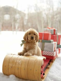 A Christmas puppy gift on a sleigh filled with other gifts.