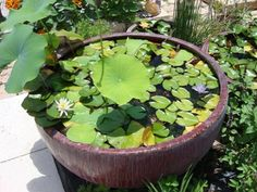 Google Image Result for http://pickmeyard.files.wordpress.com/2010/05/water-garden.jpg