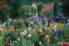 Monet's Garden in the Spring, Giverney, France    One of my dreams is to paint in this garden one day.