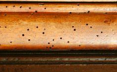Comment lutter contre les vers à bois ? noté 5 - 1 vote Vos mieux meubles commencent à être parsemés de petits trous? Les vers à bois dévorent cette matière comme du gruyère. Avant qu'il ne soit trop tard, prenez le problème au sérieux et éliminez définitivement les vers à bois de votre domicile. Il …