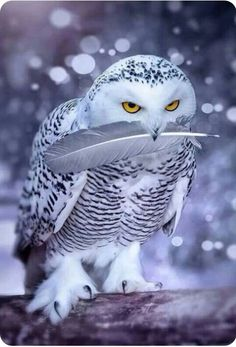 Animals And Pets, Cute Animals, Owl Pictures, Cute Birds, Birds Of Prey, Bird Feathers, Nature, Foxes, Essentials