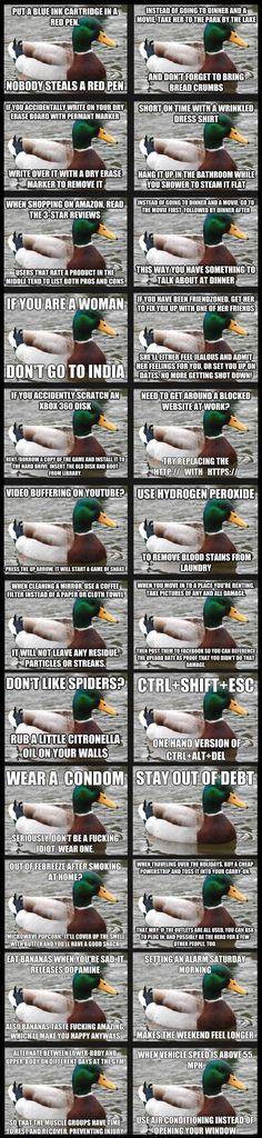 Helpful tips from a mallard.