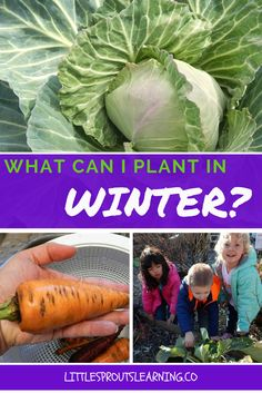 There are so many plants you can plant in winter in Oklahoma. February is a busy month for spring plantings.