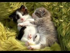Cute Baby Kitten Video TOP 10  - Cute Cat Kitten: Best Compilation  Fun ...  MORE VIDEOS HERE https://www.youtube.com/watch?v=InDJc2L_5dA&list=PLC_HjotBFMpNqd0u6cYK0NtHBXcOIEEoD   SUBSCRIBE: http://www.youtube.com/user/TheFederic777?sub_confirmation=1   #Kittens #Cats #CuteKittens