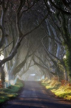 THE DARK HEDGES. A fantasy-like avenue of beech trees, the Dark Hedges was planted in the century by the Stuart family to impress visitors upon the entrance of their home. The road is known to be haunted by the Grey Lady, who appears at dusk. Places Around The World, Around The Worlds, Places To Travel, Oh The Places You'll Go, Dark Places, Travel Stuff, Filming Locations, To Infinity And Beyond, Dream Vacations