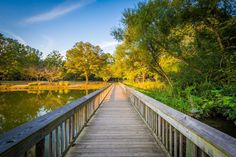 Boardwalk at Roosevelt Wilson Park, in Davidson, North Carolina. | Mounted Photo Print, Stretched Canvas, Metal Print Home Decor Wall Art.