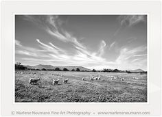 Marlene Neumann is a Master Photographer who intuitively captures the emotion in a landscape, beyond the camera.Her Black and White photographs are timeless Fine Art Photography, Landscape Photography, African, Clouds, Art Prints, Black And White, Random, Art Impressions, Fine Art Prints
