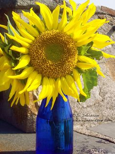 I Love a bright happy sunflower in a blue vase