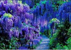 flower gardens in  italy | Positano, Italy | Botanical Garden, Flowers