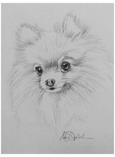 Cute Animal Drawings, Cool Art Drawings, Pencil Art Drawings, Art Drawings Sketches, Sketches Of Animals, Drawing Ideas, Realistic Animal Drawings, Dog Drawings, Cute Animals To Draw
