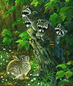 """No Room at the Top Family of Raccoons and Bunny Rabbit 550 piece Jigsaw Puzzle    SunsOut Jigsaw Puzzles will provide a challenge for one and all.  Perfect for collectors to mat and frame.  Art by Terry Doughty  Size: 15.5"""" x 18"""" Made in the USA, by SunsOut.    Eco-Friendly, Soy Based Inks & Recycled Board.    Recommended Ages: 8 and Up    Consumer Product Safety Notice:  WARNING: CHOKING HAZARD  Small parts Not for children under 3 years SO71121  Regular price: $12.00  Sale price: $10.80"""