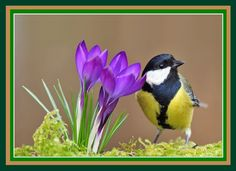 Photograph Great tit by Uros Poteko on Beautiful Birds, Beautiful World, Animals Beautiful, Beautiful Pictures, Cute Animals, Mother Earth, Mother Nature, Parus Major, Mother Pictures