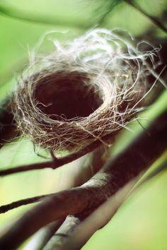 nest: warrig, klimmen (hoog) rusten, veilig voelen