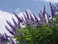 #Chasteberry extract can help manage #PMS symptoms #AskDrNigma Also known as agnus castus, chasteberry extract helps balance progesterone levels which, when low, can lead to PMS-based symptoms such as mood swings and anxiety. A 200mg supplement daily can help alleviate these. #YoungerSkinStartsInTheGut #Homeo