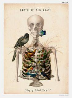 We are enjoying French digital artist Isabelle Dalle's series of anatomical portraits. Influenced by the art in medical journals, Isabelle draws c. Vanitas, Memento Mori, Happy Bird Day, Illustration Arte, Cat Illustrations, Art Et Design, Anatomy Art, Skull And Bones, Skull Art