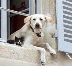 NEYLEYİM penceresinde çiçeği koltuğunda kedisi kapısında köpeği baş köşede dedesiyle nenesi olmayan evi