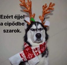 He wasn't playing reindeer games. - Funny pictures and memes of dogs doing and implying things. If you thought you couldn't possible love dogs anymore, this might prove you wrong. Merry Christmas Dog, Merry Christmas Ya Filthy Animal, Funny Dogs, Funny Animals, Cute Animals, Dog Memes, Funny Memes, Chesire Cat, Pet News