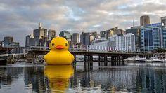 Giant Duck in Sydney