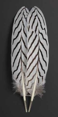 Silver Pheasant Feathers | Atlantic Salmon Fly Tying Materials | Classic Salmon Fly Tying Materials
