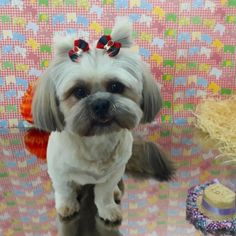 Pet Shop, Shih Tzu, Dogs, Animals, Animals And Pets, Night, Bath, Products, Environment