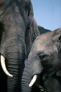 Elephants Tarangire National Park Tanzania