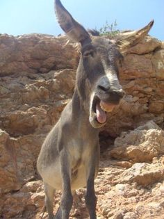 Image result for crazy donkey