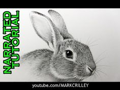 How to Draw a Rabbit: Narrated, Step-by-Step - YouTube