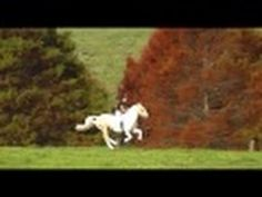 HORSES    AND    GIRL Horses, Youtube, Horse