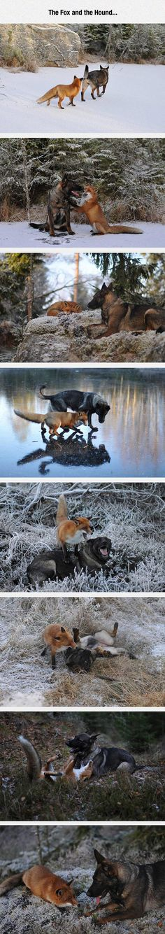 funny-hound-fox-snow-winter-friends