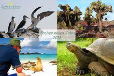 Das Reiseziel für 2018 - die Galapagos-Inseln! Frohes Neues Jahr - Feliz ano nuevo - Happy New Year!