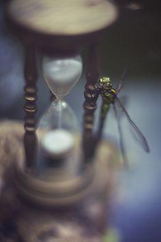 dragon hourglass fly