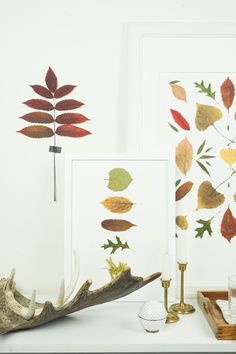 Bring Autumn's colors inside your home with budget friendly pressed leaf art. Pressed Leaves, Leaf Art, Diy Projects To Try, Autumn Leaves, Display, Create, Fall, Autumnal, Photos
