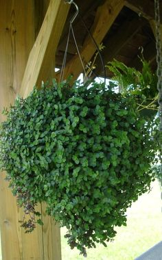 Unique kokedama samambaia Ball Ideas for Hanging Garden Plants selber machen ball