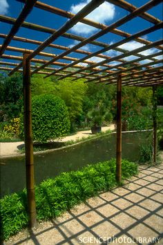 Love the simplicity of this bamboo pergola.
