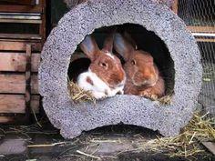 Kaninchen im Rohr
