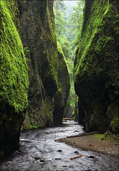 "Road Trips: ""Hiking this emerald chasm takes you past 4 incredible waterfalls."" Oneonta Gorge."
