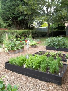 The flourishing kitchen garden at Maldon Primary.