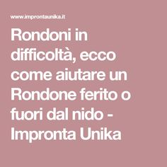 Rondoni in difficoltà, ecco come aiutare un Rondone ferito o fuori dal nido - Impronta Unika