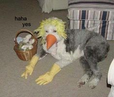 Funny pics, memes, infographics and gifs. this is a cursed image, that's to scary for r/cursedimages Stupid Memes, Dankest Memes, Funny Memes, Funny Fails, Hilarious, Meme Meme, Undertale Alphys, Funny Animal Pictures, Funny Animals