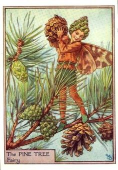 Pine Tree Flower Fairy Print c.1950 Fairies by Cicely Mary Barker