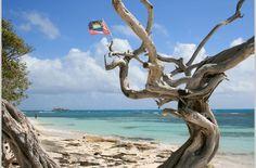 Jabberwock beach #Antigua