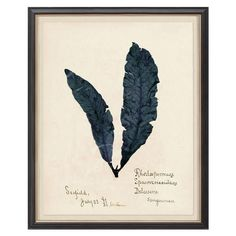 A beautiful take on a vintage seaweed study, the deep blues and oversized scale make this one of our favorite statement pieces.