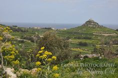 Spring in Gozo - a beautiful view from Ta Mena