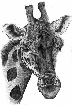black and white sketch of a giraffe | giraffe portrait