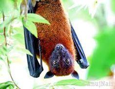 pretty bat
