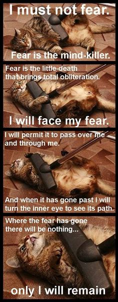 Dune Cat is not afraid...
